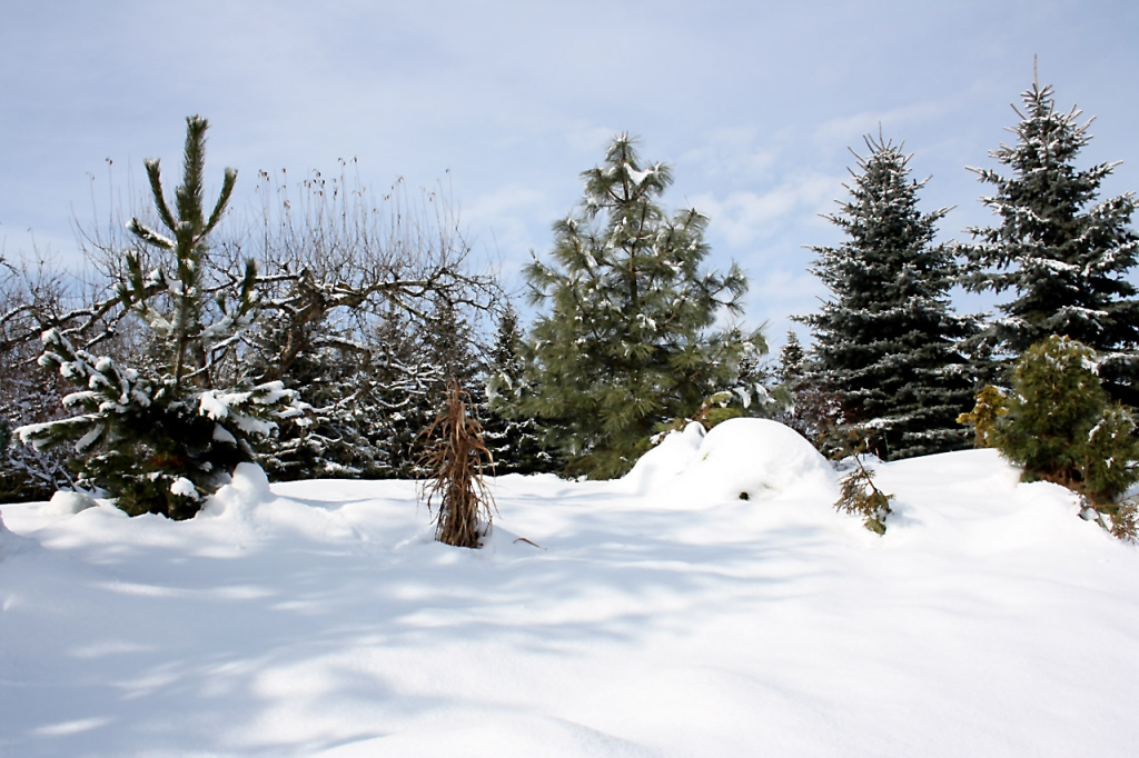 zahrada-zima-01